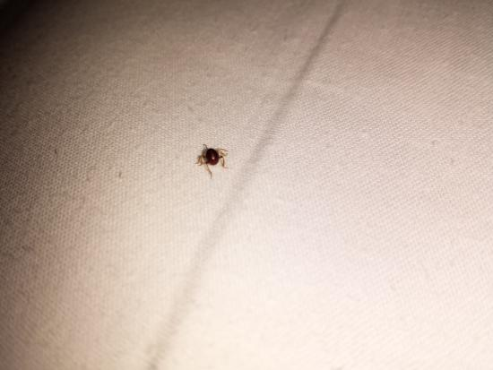 Park South Hotel Bed Bugs