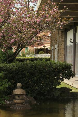 Ciliegi foto di giardino giapponese roma tripadvisor - Piccolo giardino giapponese ...