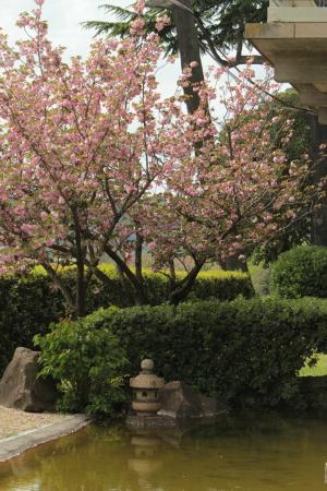 Ciliegio e lanterna foto di giardino giapponese roma - Ciliegio da giardino ...