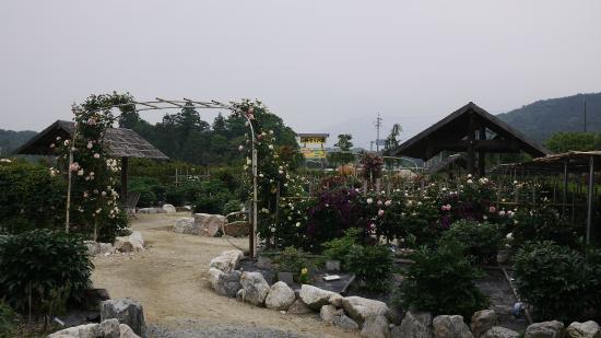Hino Dahlia Garden