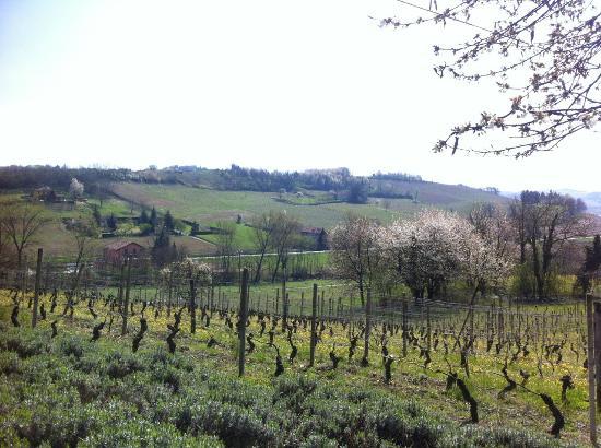 Cascina Blon: Холмы с виноградниками