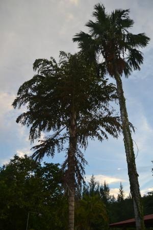 Sky Blue Guest House: Giardino