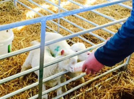 Smeaton Farm: Feeding time