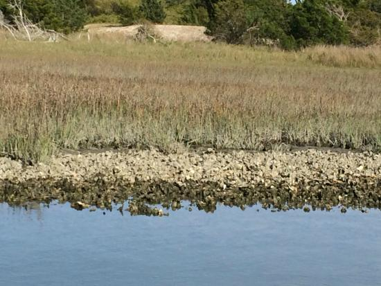 Waterbug Tours: Oysters