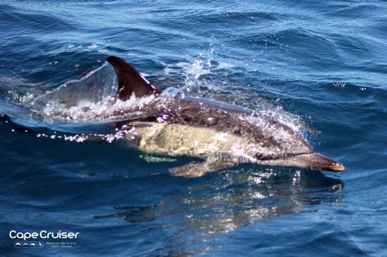 Cape Cruiser: photo0.jpg