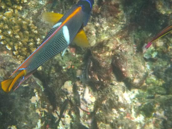 Drake Bay, Kostaryka: Fish with a little coral
