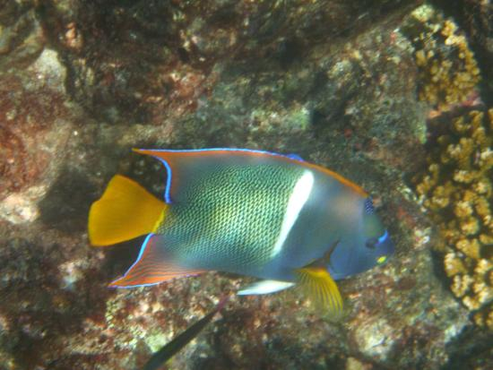 Drake Bay, Kostaryka: Colorful fish over the rocks