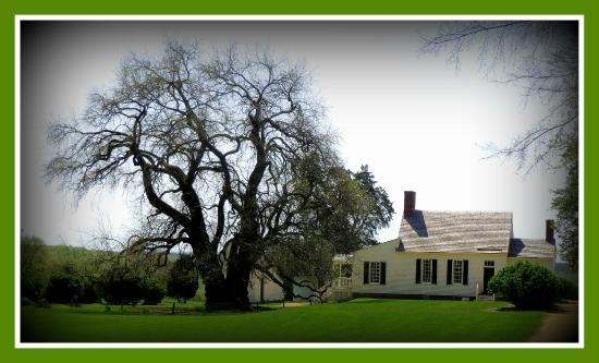 Brookneal, فيرجينيا: Osage Orange Tree and Main House
