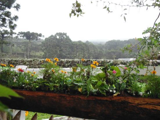 Fazenda Santa Rita Turismo Rural: plantinha e ao fundo floresta de araucárias