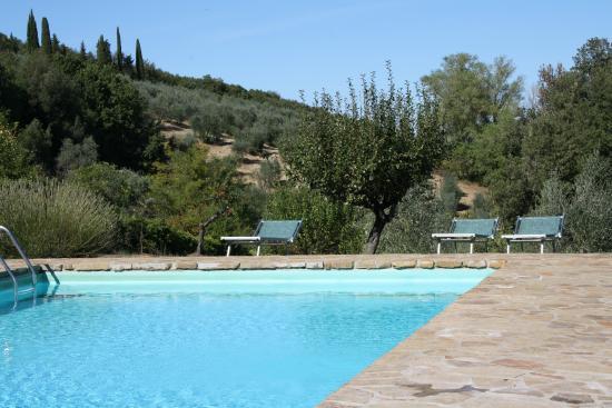 Fattoria San Donato: piscina