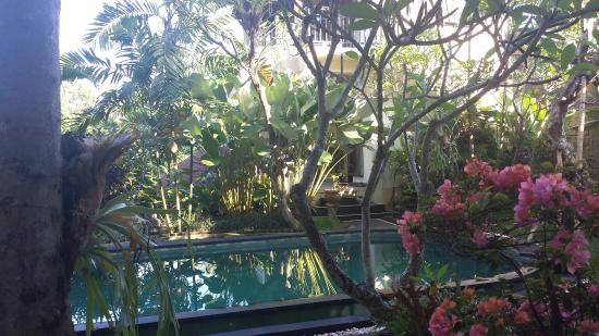 Padma Ubud Retreat: Beautiful poolside room.