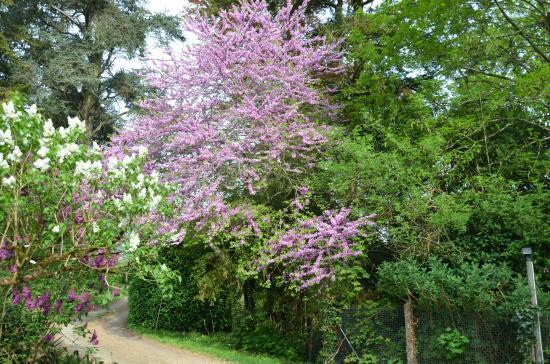 Domaine de Joreau: très beau jardin
