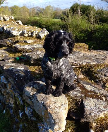 Silchester Roman City Walls and Amphitheatre: R dog enjoying the rest on one of our many walks/runs around this lovely place.
