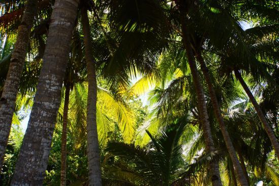 Le Jardin Maore : Karibou