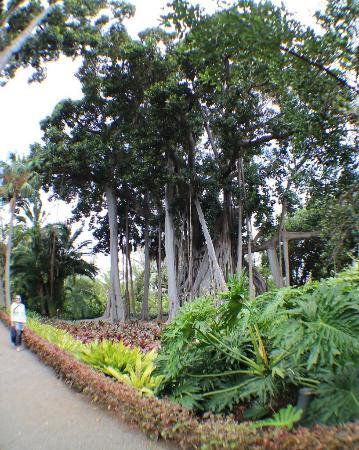 Botanical Gardens (Jardin Botanico) - Picture of Botanical Gardens (Jardin Bo...
