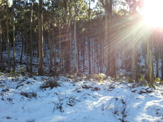 Mount Cole State Park: Snow every few years or so at Mount Cole - this was August 2014.