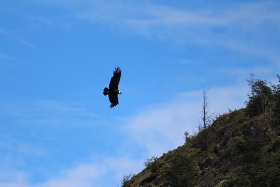 The Condors Nests: voo condor