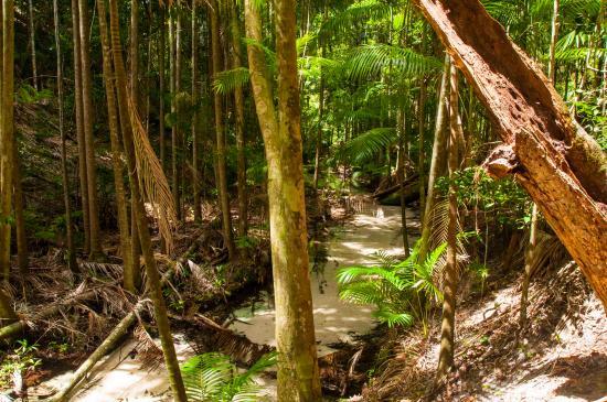 Fraser Island, Australia: Rainforest walk 2