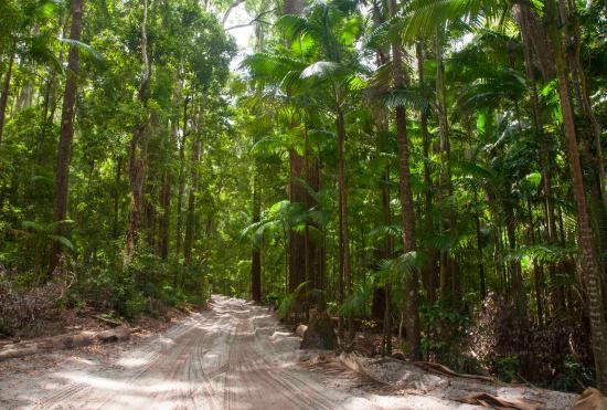 Fraser Island, Australia: The road in