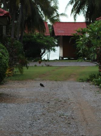 Bann Kruit Youth Hostel : ส่วนห้องพัก บังกะโล