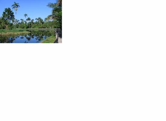 Royal Palm Reserve Jamaica