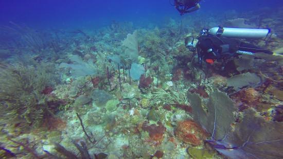 Bayahibe, Dominikanska Republiken: Great coral reefs