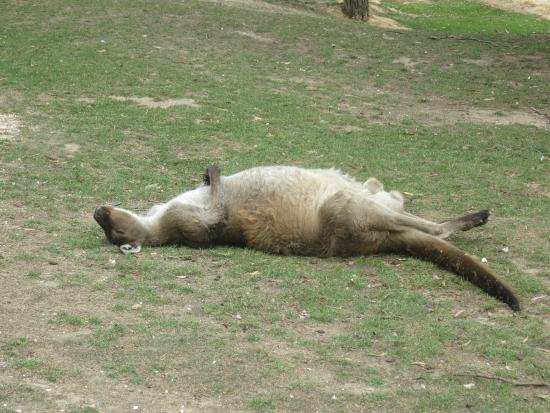 images ballarat wildlife - photo #12
