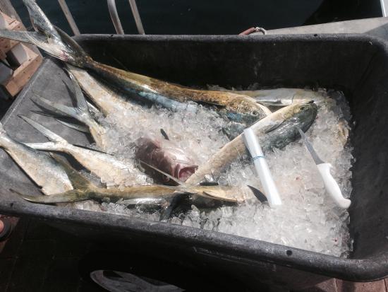 Neptuna Fishing Charter: photo2.jpg