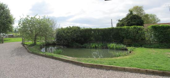 Green Orchard: The Garden Pond