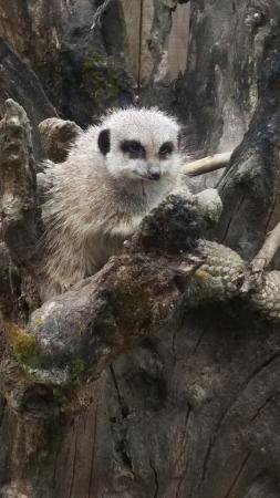 Axe Valley Wildlife Park: meerkats ��