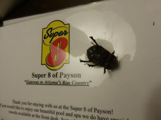 Super 8 Payson : On the Ad flyer