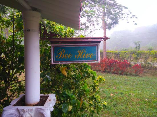 Comfort Homestay - Bee Hive: House name