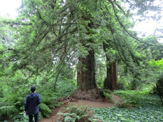Magnificent Trees Picture Of Golden Gate Park San
