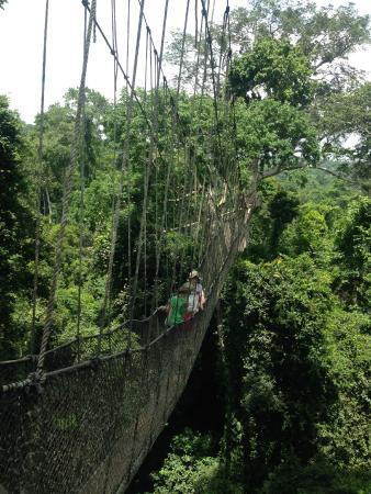 Ghana Nima Tours: Kakum