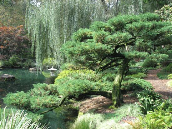 Pine in the Japanese Garden - Picture of Gibbs Gardens, Ball Ground ...