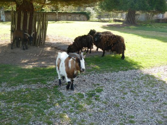 mini ferme Photo de Center Parcs Les Bois Francs, Verneuil sur Avre TripAdvisor # Les Bois Francs Avis