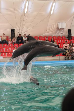 Odessa Delphinarium Nemo: .