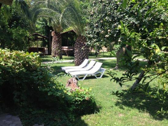 Olympos Yavuz Hotel: bahçe