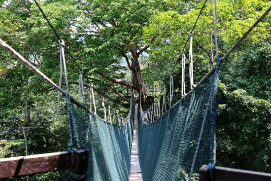 FRIM Canopy Walk Forest Research Institute Malaysia & Forest Research Institute Malaysia - Picture of FRIM Canopy Walk ...