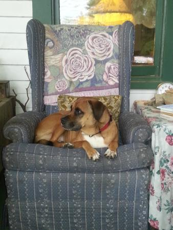 Marilyn's Melrose Inn : My dog lounging on the front porch