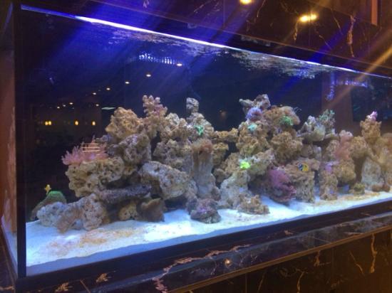 Crisp Clean Aquarium Picture Of Pho Hung Restaurant