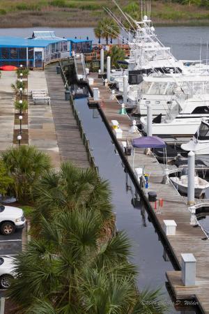 Harbourgate Resort & Marina, Oceana Resorts: Marina area