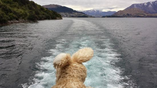 Queenstown Lake Cruise - Southern Discoveries: Morning Cruise