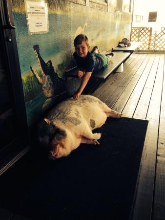 Pork Chop - the pet pig. - Picture of AirBoat Rides at Midway ...