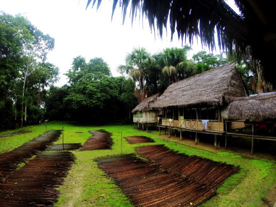 Ecological Jungle Trips: Delfin Lodge - note the rain. It's the rainforest, of course!