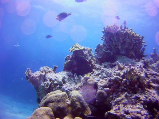Kelly's Water Sports: A still Picture of some coral and fish on our second dive