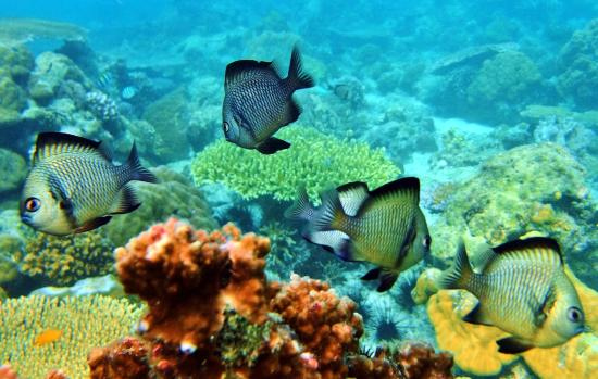 Coral Garden Boracay with White Beach Divers
