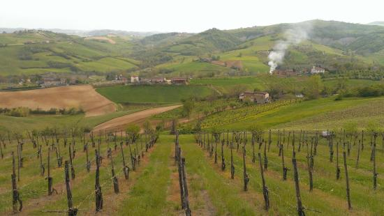 Podere Diamante: A view fro our room