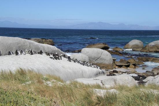 Boulders Beach Lodge and Restaurant: bouders beach