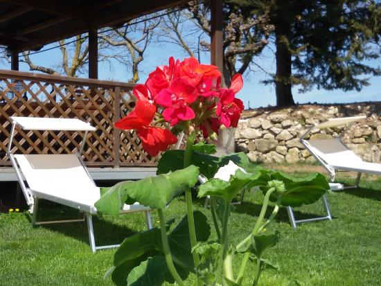 Badia a Passignano, Olaszország: giardino